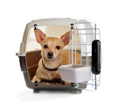 Puppy Crate Training – How To Successfully Crate Train Your Puppy